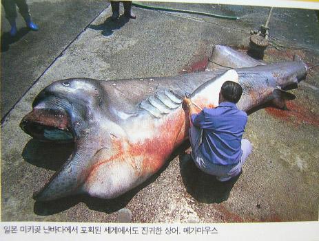 Les requins moins connus – Lesser-known sharks ...