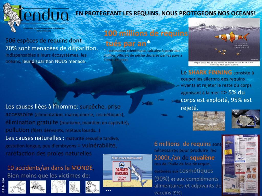 affiche requins 2015